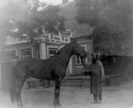 Stallion held by servant on Seljonoje Estate