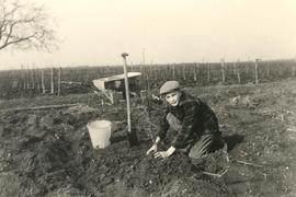 Alfred Wiebe planting trees  (1957)