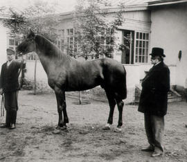 Peter Bahnmann standing with his breeding stallion