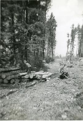 A man arranging cut logs