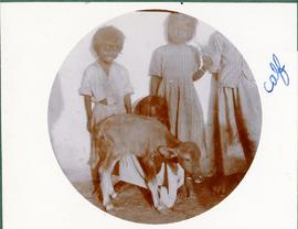 Children and a calf