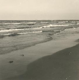 Baltic Sea shore at Zappat