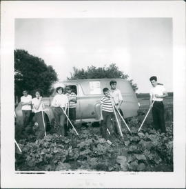 Youth of the church hoeing beets to raise money for mission projects - 2 photos