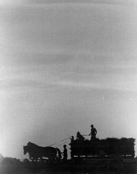 Old Order Mennonites loading a wagon in the field.