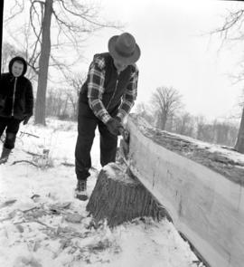 Simeon Martin broadaxing trees for the beams for the restoration of the Brubacher House