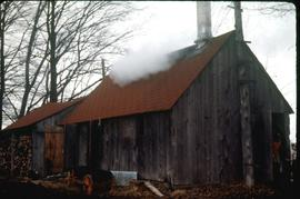 Maple syrup shack west of Martin's school in