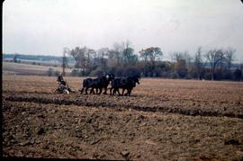 Five-horse team working the field, Oct. 1969