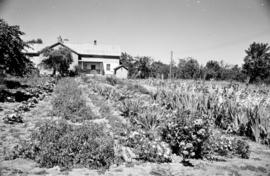 A large garden in front of a Mennonite home in