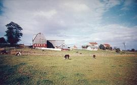 A typical Old Order Mennonite farm scene located near St. Jacobs, Ontario