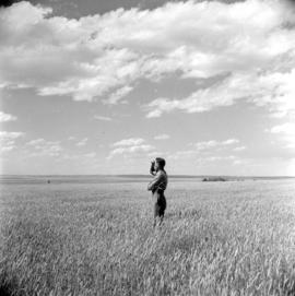 P. B. Wiens, farmer in Herschel, Sask., stands in a field of summer fallow wheat