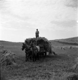 Wagon full of hay pulled by a team of horses.