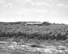 A Mennonite farm near Elmira, Ontario.  Probably