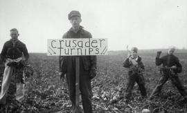Crusader group in turnip field