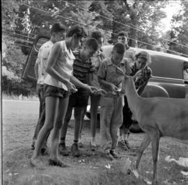 Group from Camp Shalom feeding a deer in  Algonquin Provincial Park