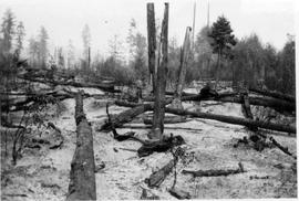 Results of a forest fire