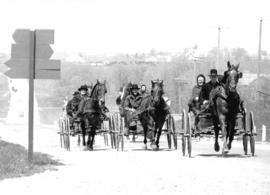 Old Order Mennonites and buggies