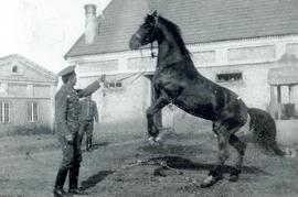 Training a horse