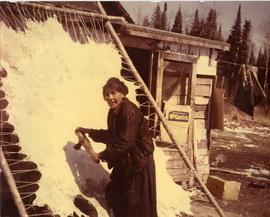 Woman scraping a moose hide