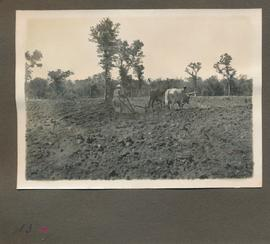 "Edited ""Hoffnungsfeld, Indians plowing."""