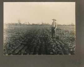 Waldheim, Heinrich B. Toews in a beet field.