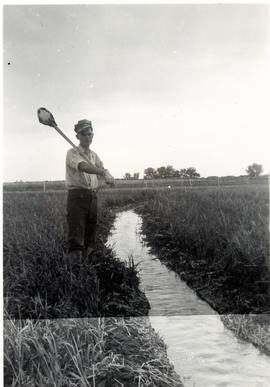 Abram Regier by an irrigation stream, Coaldale 1946