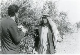 In an  olive orchard in Jordan
