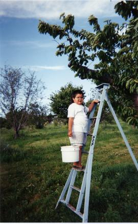 Curtis Smith Jr. picking cherries