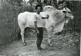 Indonesia - Oxen Credit Project