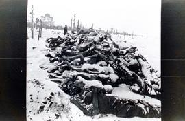 Dead bodies piled up like logs in the winter