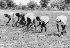 Working and planting the soil (Africa)