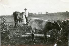 Maria milking a cow and Isaak with her 1933-1935