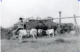 Threshing on Fehdrau Estate