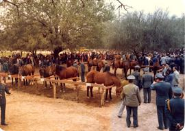 Paraguayan officials visit exhibit of horses at the Fernheim Colony fiftieth anniversary, July 4, 1980