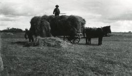 Pitching Hay onto Wagon