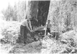 Henry Langeman and Martin Wiens felling a tree
